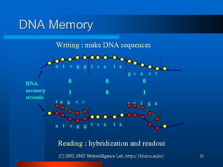 DNA Memory Writing : make DNA sequences a t c g g t c