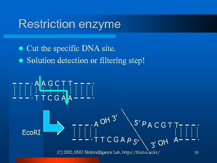 Restriction enzyme Cut the specific DNA site. l Solution detection or filtering step! l