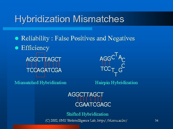 Hybridization Mismatches Reliability : False Positives and Negatives l Efficiency l AGGCTTAGCT TCCAGATCGA Mismatched