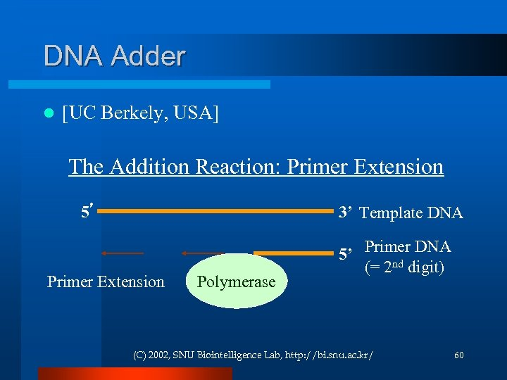 DNA Adder l [UC Berkely, USA] The Addition Reaction: Primer Extension 5' 3' Template