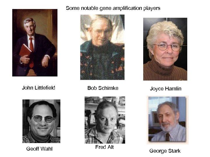 Some notable gene amplification players John Littlefield Geoff Wahl Bob Schimke Fred Alt Joyce