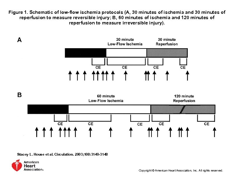 Figure 1. Schematic of low-flow ischemia protocols (A, 30 minutes of ischemia and 30