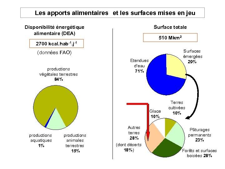 Les apports alimentaires et les surfaces mises en jeu Disponibilité énergétique alimentaire (DEA)