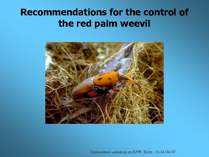 Recommendations for the control of the red palm weevil Internatonal workshop on RPW. Elche.