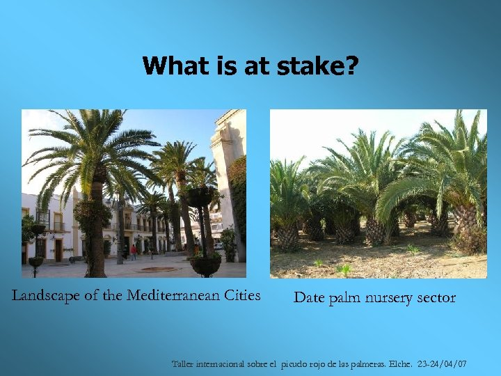 What is at stake? Landscape of the Mediterranean Cities Date palm nursery sector Taller