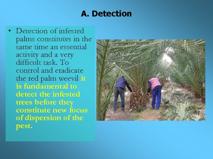 A. Detection • Detection of infested palms constitutes in the same time an essential