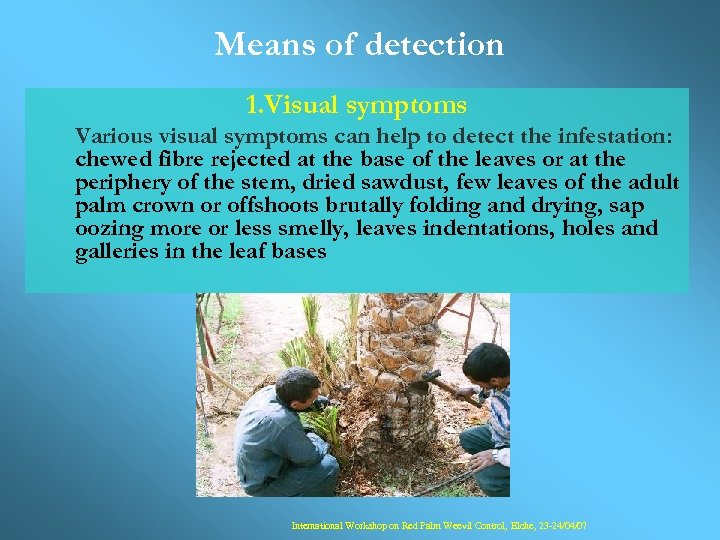 Means of detection 1. Visual symptoms Various visual symptoms can help to detect the