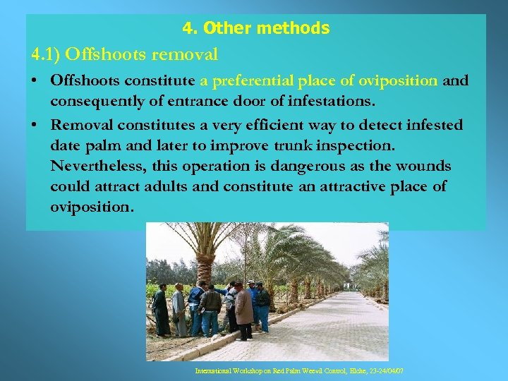 4. Other methods 4. 1) Offshoots removal • Offshoots constitute a preferential place of