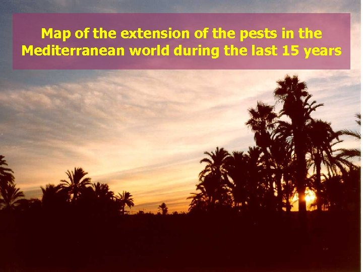 Map of the extension of the pests in the Mediterranean world during the last