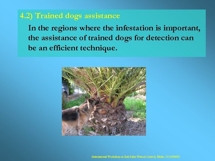 4. 2) Trained dogs assistance In the regions where the infestation is important, the