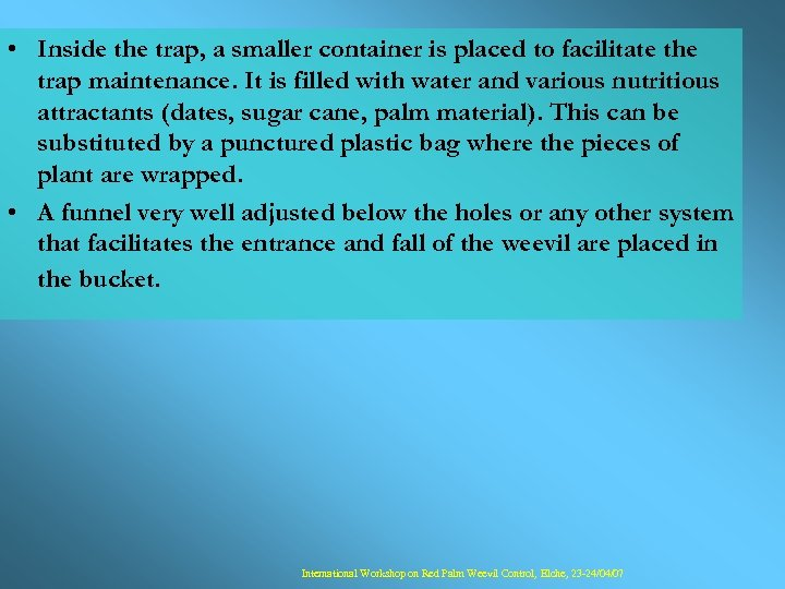 • Inside the trap, a smaller container is placed to facilitate the trap