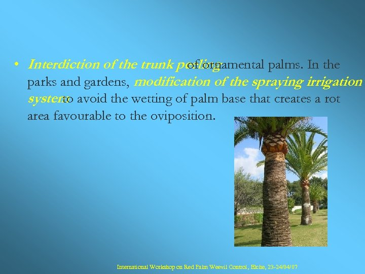 • Interdiction of the trunk peeling of ornamental palms. In the parks and