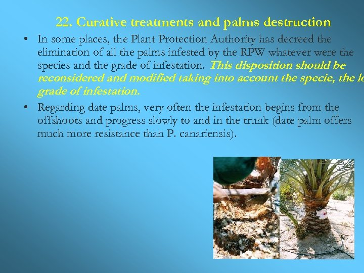 22. Curative treatments and palms destruction • In some places, the Plant Protection Authority