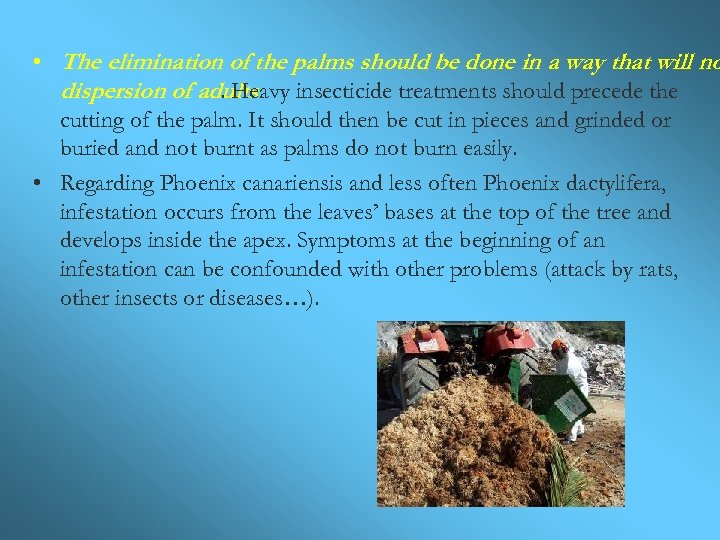 • The elimination of the palms should be done in a way that