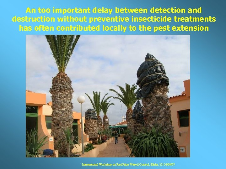 An too important delay between detection and destruction without preventive insecticide treatments has often