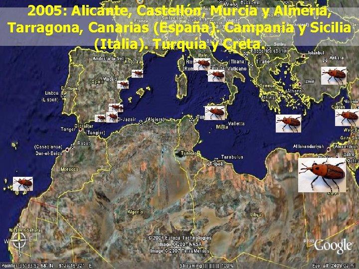 2005: Alicante, Castellón, Murcia y Almería, Tarragona, Canarias (España). Campania y Sicilia (Italia). Turquía