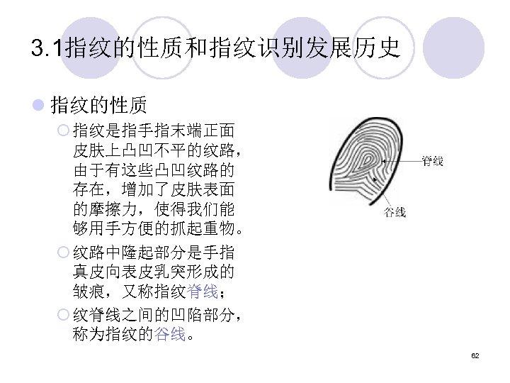 3. 1指纹的性质和指纹识别发展历史 l 指纹的性质 ¡ 指纹是指手指末端正面 皮肤上凸凹不平的纹路, 由于有这些凸凹纹路的 存在,增加了皮肤表面 的摩擦力,使得我们能 够用手方便的抓起重物。 ¡ 纹路中隆起部分是手指 真皮向表皮乳突形成的