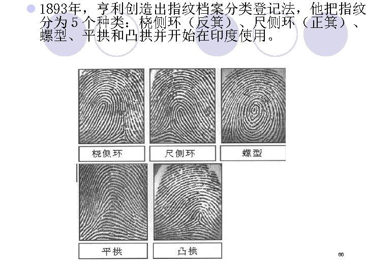 l 1893年,亨利创造出指纹档案分类登记法,他把指纹 分为5个种类:桡侧环(反箕)、尺侧环(正箕)、 螺型、平拱和凸拱并开始在印度使用。 66