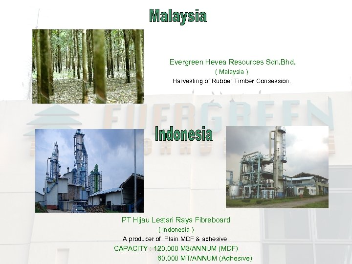 Evergreen Hevea Resources Sdn. Bhd. ( Malaysia ) Harvesting of Rubber Timber Consession. PT