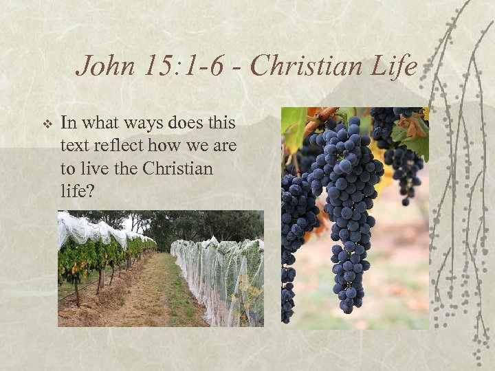 John 15: 1 -6 - Christian Life v In what ways does this text