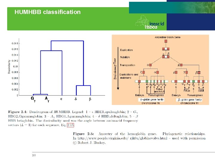 HUMHBB classification 20