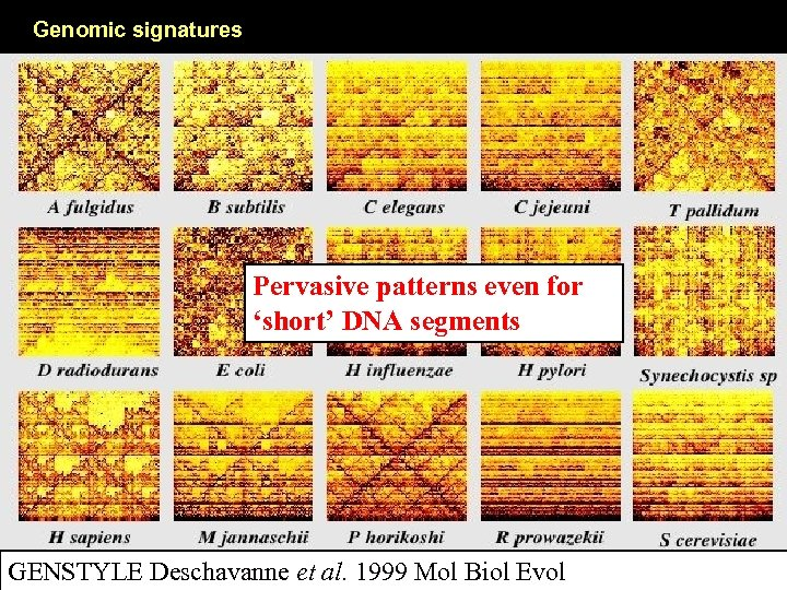 Genomic signatures Pervasive patterns even for 'short' DNA segments GENSTYLE Deschavanne et al. 1999