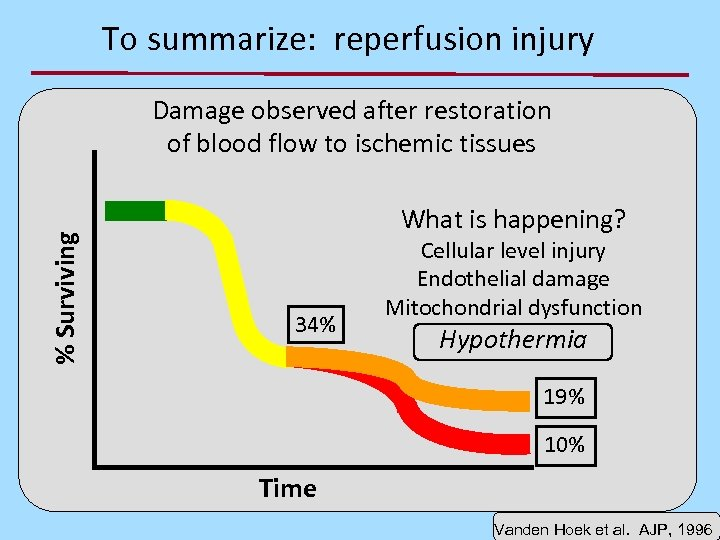 To summarize: reperfusion injury % Surviving Damage observed after restoration of blood flow to