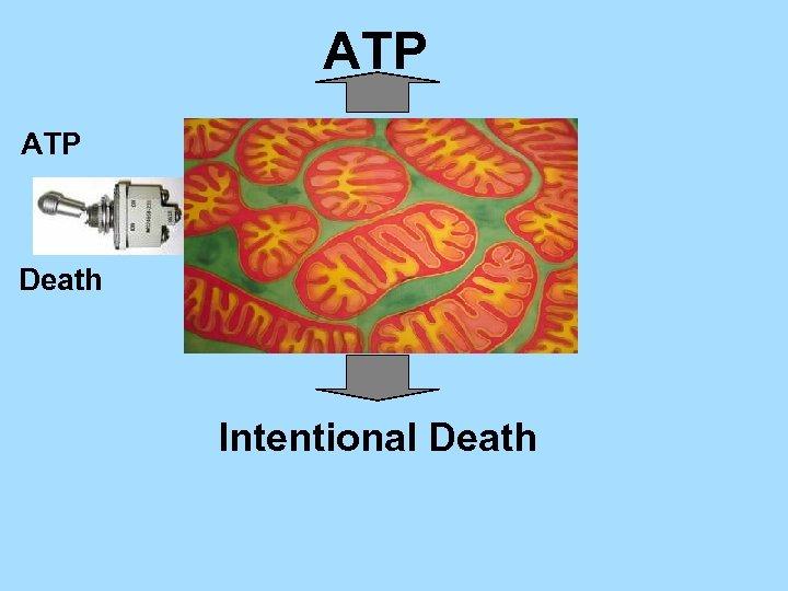 ATP Death Intentional Death