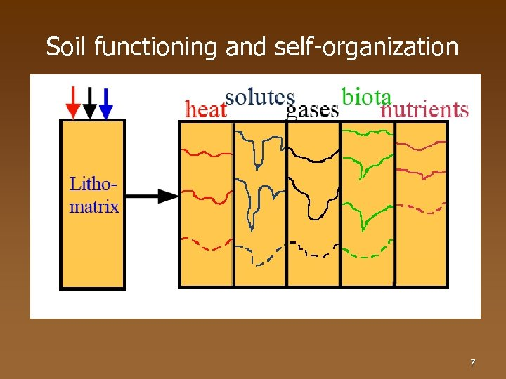 Soil functioning and self-organization 7