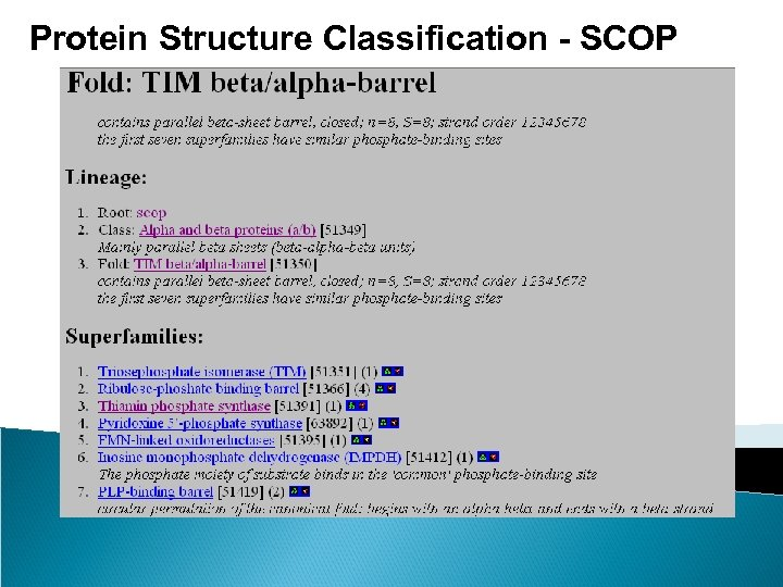 Protein Structure Classification - SCOP