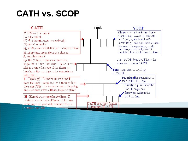 CATH vs. SCOP