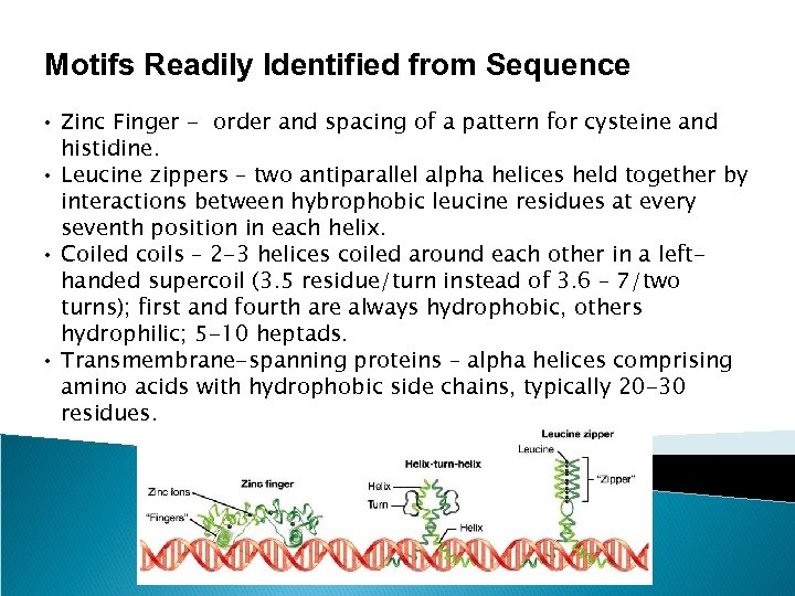 Motifs Readily Identified from Sequence • Zinc Finger - order and spacing of a