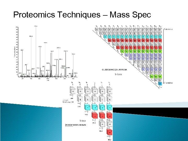 Proteomics Techniques – Mass Spec