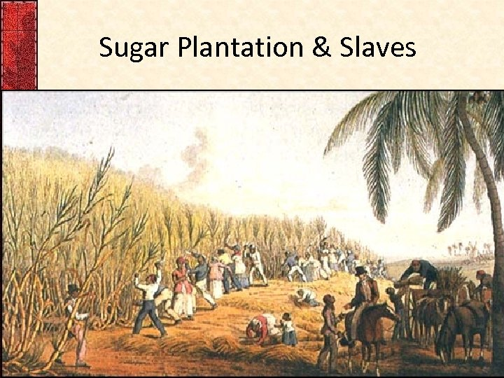 Sugar Plantation & Slaves