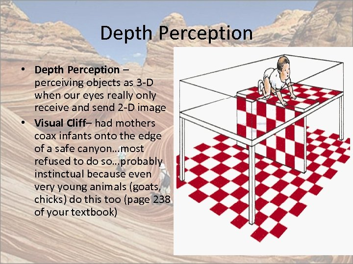 Depth Perception • Depth Perception – perceiving objects as 3 -D when our eyes