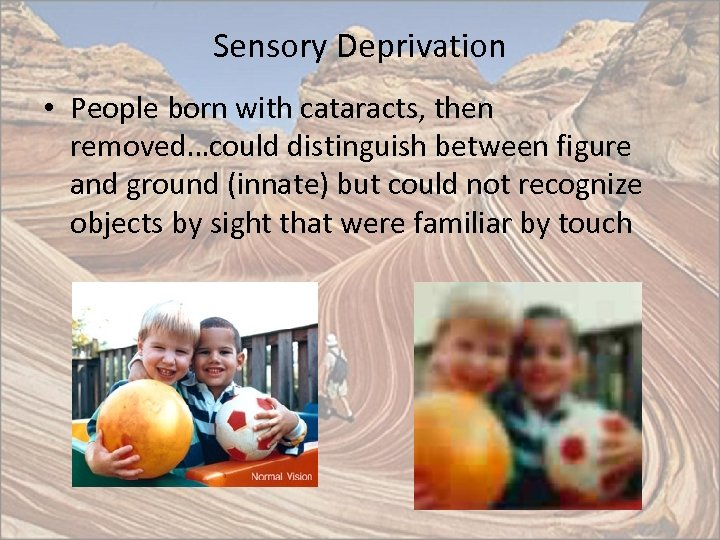 Sensory Deprivation • People born with cataracts, then removed…could distinguish between figure and ground
