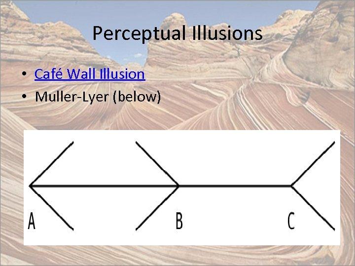 Perceptual Illusions • Café Wall Illusion • Muller-Lyer (below)