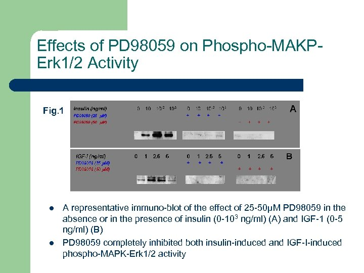 Effects of PD 98059 on Phospho-MAKPErk 1/2 Activity Fig. 1 l l A representative