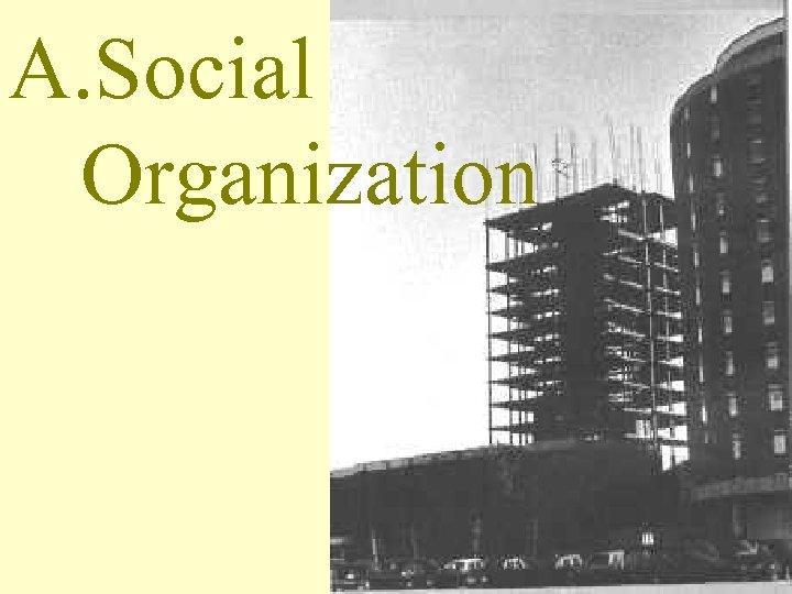 A. Social Organization
