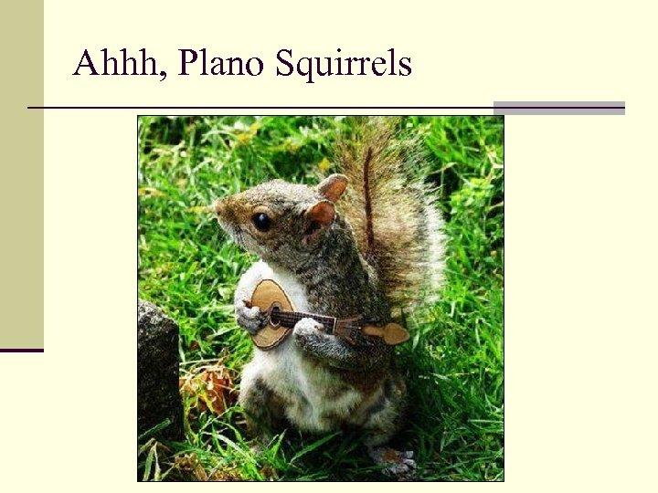 Ahhh, Plano Squirrels