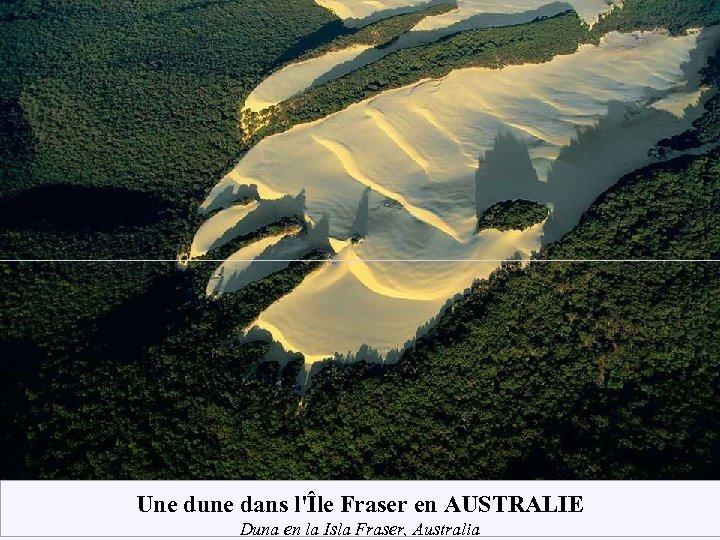 Une dune dans l'Île Fraser en AUSTRALIE Duna en la Isla Fraser, Australia