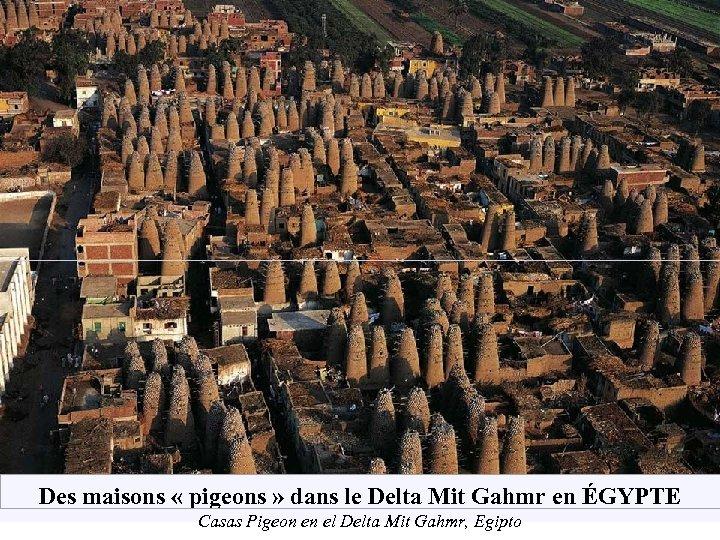 Des maisons « pigeons » dans le Delta Mit Gahmr en ÉGYPTE Casas Pigeon