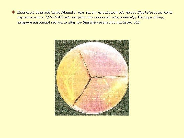 v Εκλεκτικό θρεπτικό υλικό Mannitol agar για την απομόνωση του γένους Staphylococcus λόγω περιεκτικότητος