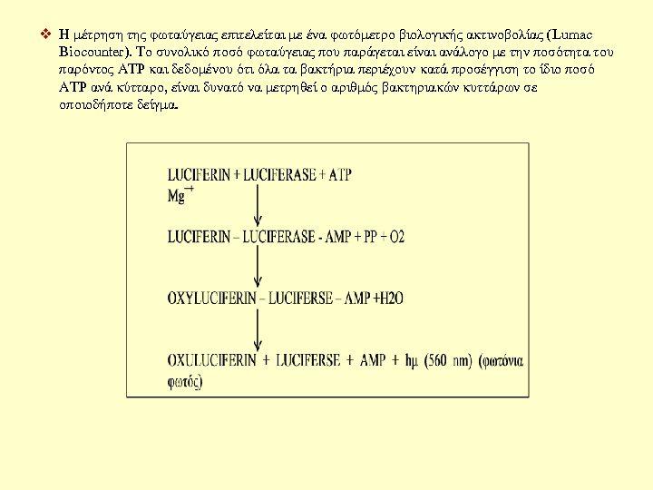 v Η μέτρηση της φωταύγειας επιτελείται με ένα φωτόμετρο βιολογικής ακτινοβολίας (Lumac Biocounter). Το