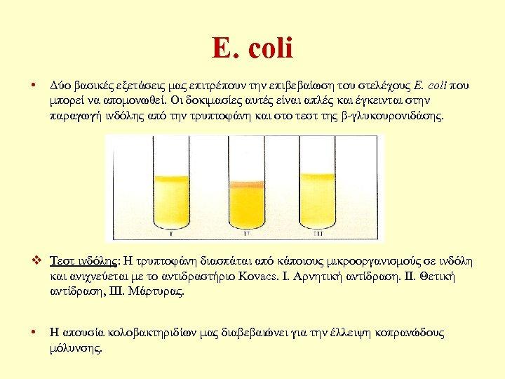 E. coli • Δύο βασικές εξετάσεις μας επιτρέπουν την επιβεβαίωση του στελέχους E. coli