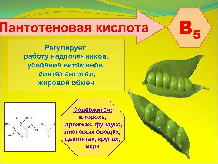 Пантотеновая кислота Регулирует работу надпочечников, усвоение витаминов, синтез антител, жировой обмен Содержится: в горохе,