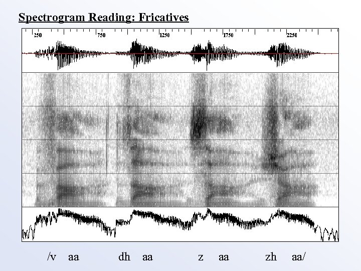 Spectrogram Reading: Fricatives /v aa dh aa zh aa/