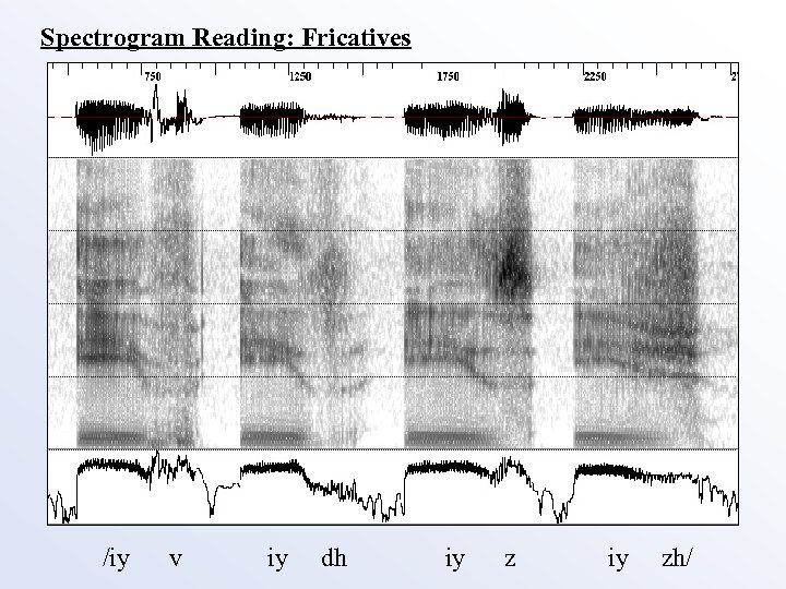 Spectrogram Reading: Fricatives /iy v iy dh iy zh/