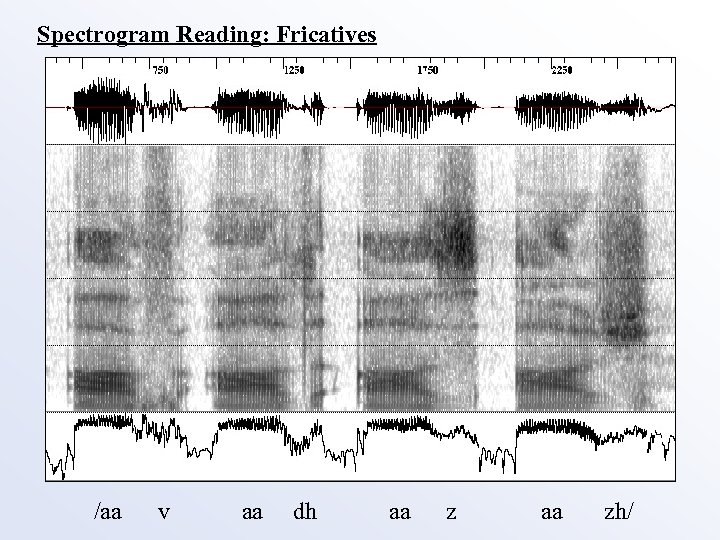 Spectrogram Reading: Fricatives /aa v aa dh aa zh/