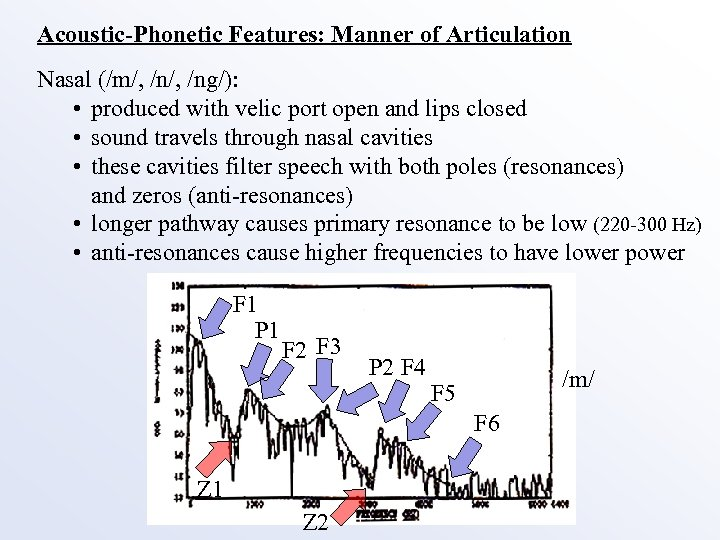 Acoustic-Phonetic Features: Manner of Articulation Nasal (/m/, /ng/): • produced with velic port open